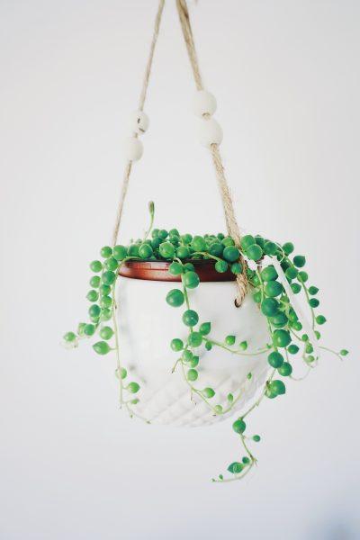Choisir sa plante d'intérieur : plante verte suspendue