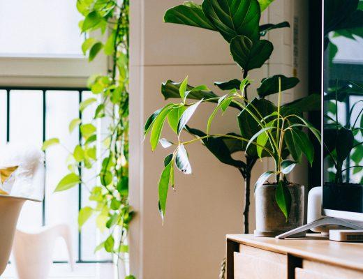 Quelle plante d'intérieur choisir pour décorer sa maison ?