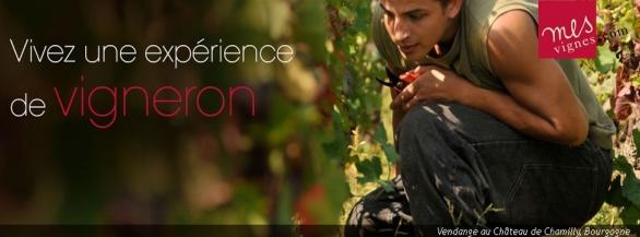 Vivez une expérience Unique : Partez à la rencontre d'un Vigneron !